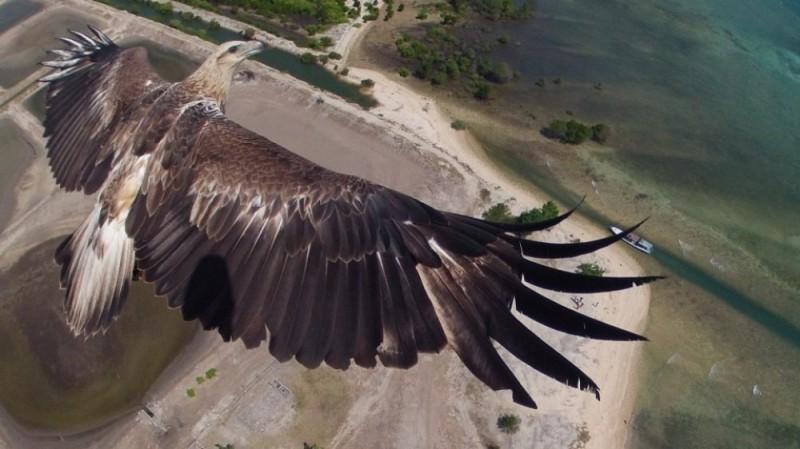 С высоты птичьего полета...
