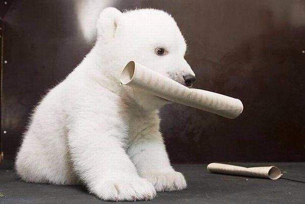 Маленькая белая медведица по имени Снежинка, Нюрнбергский зоопарк 5
