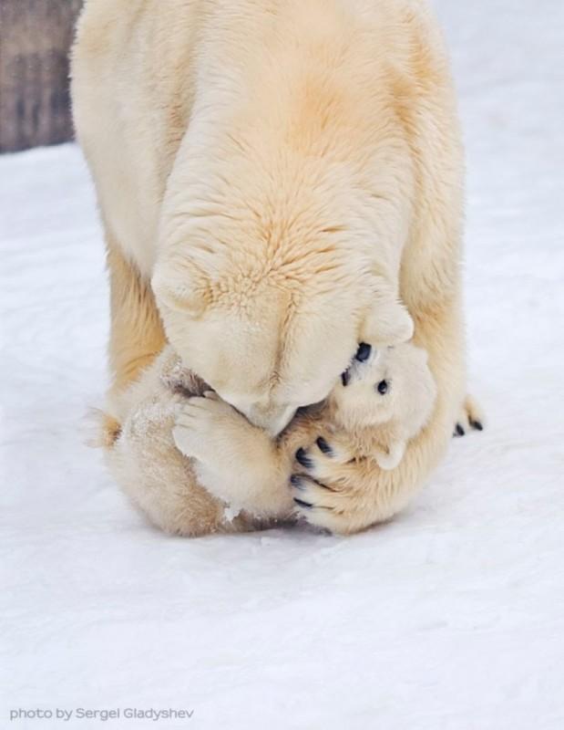 Вот так медведицы любят своих медвежат 0