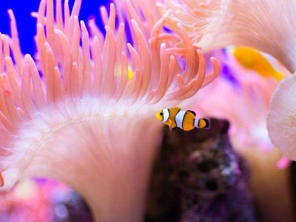 Красоты Большого Барьерного рифа 0