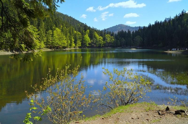 Карпатская природа: озеро Синевир