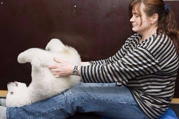 Маленькая белая медведица по имени Снежинка, Нюрнбергский зоопарк 1