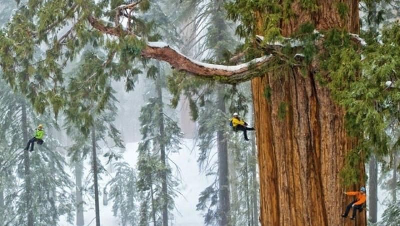 Чтобы заснять это дерево целиком, фотографам понадобилось 32 дня 1