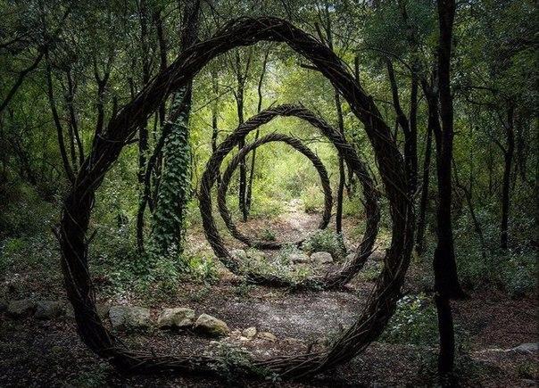 За год жизни в лесу Спенсер Байлс превратил его в сказку.