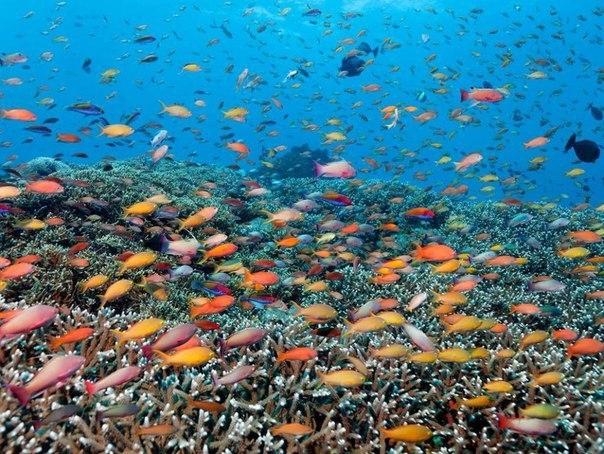 Красоты Большого Барьерного рифа 5