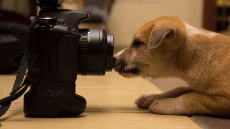 Забавные животные-фотографы