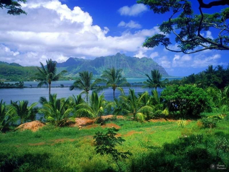 Отдых на Гавайских островах 0