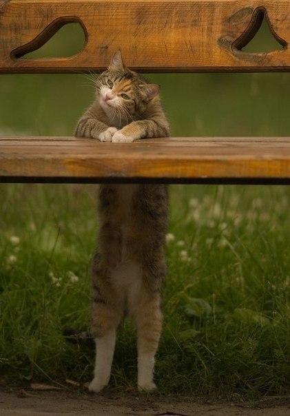 Очень радостный кот