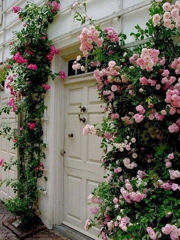 Романтика летнего сада