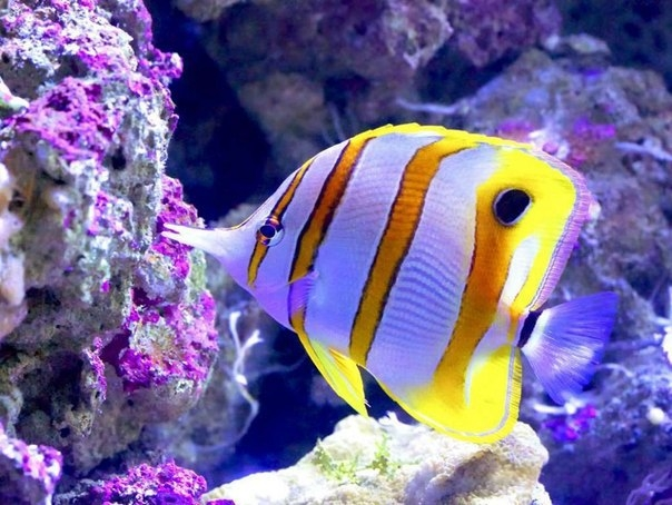 Красоты Большого Барьерного рифа 4