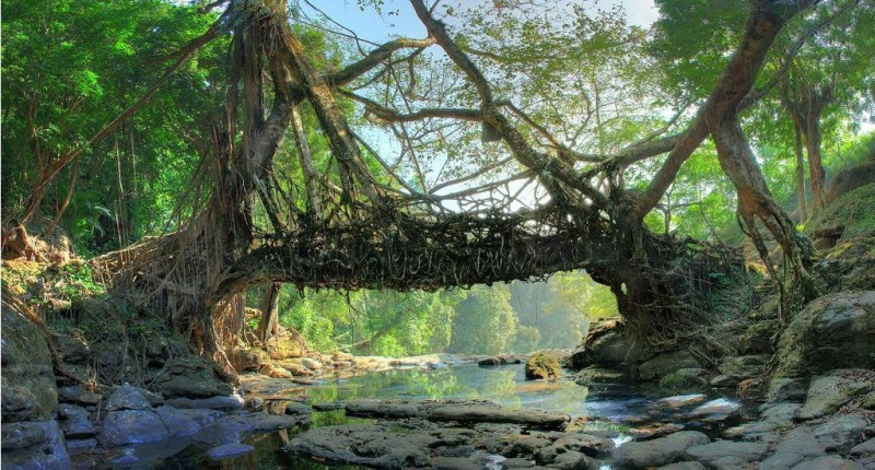 Мост из деревьев племени Хаси