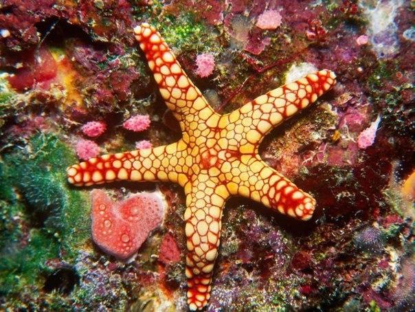 Красоты Большого Барьерного рифа 8