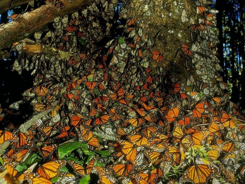 Огромный заповедник, названный в честь маленькой бабочки. 6